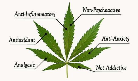 hemp-leaf-info-graphic-small.jpg
